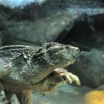 Traveling with Twins: Echo Aquarium, Burlington VT