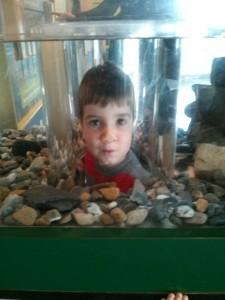 echo aquarium